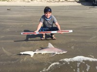 Sharks on the sand - Noah heffernan